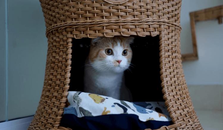 ペット可の物件で猫と暮らす